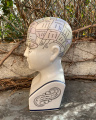 Porcelain Phrenological Head